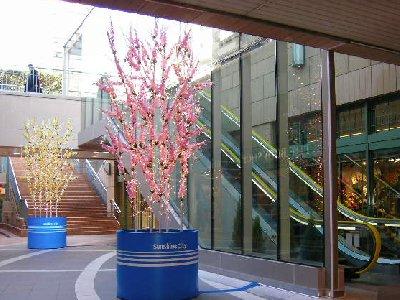 サンシャイン春のツリー
