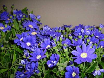 きれいな紫のお花