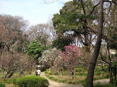 梅園散歩1