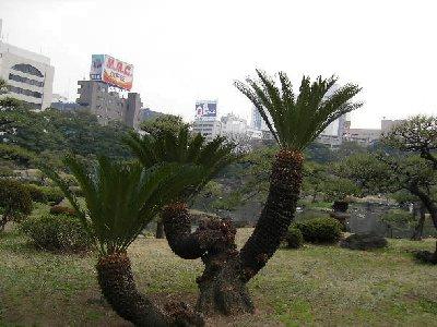 庭園で南国の木