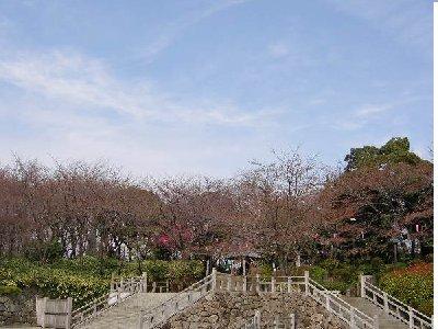 飛鳥山の広場