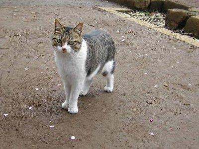 飛鳥山公園で猫ちゃん