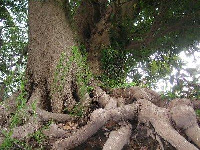 樹木の凄さ