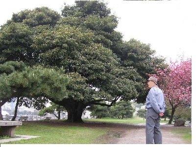 素晴らしい1本の木