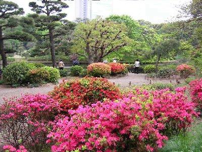 庭園ツツジ