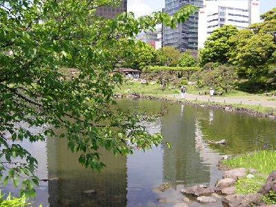 庭園の新緑