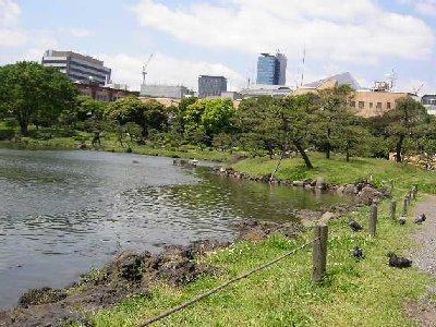 池の側で鳩が日向ぼっこ