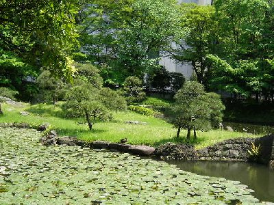 小石川後楽園のハス