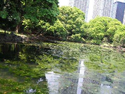 庭園の海水の池