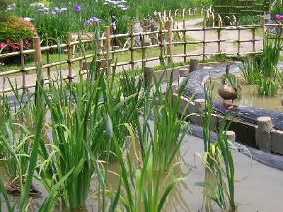 かもと菖蒲園