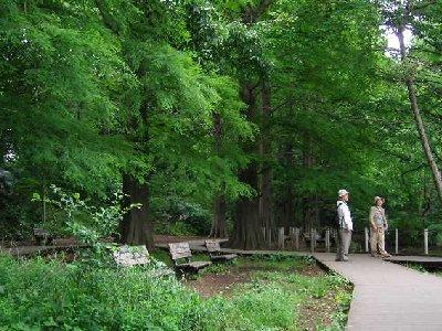 石神井公園散歩道