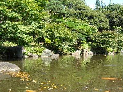 池に落ち葉と鯉秋ふかし