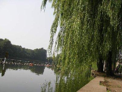 柳の木石神井公園