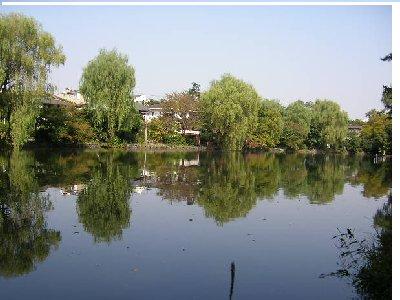 美しい石神井公園