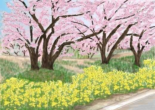 故郷の桜!